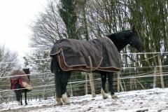 Paddockauslauf und frische Luft auch im tiefsten Winter