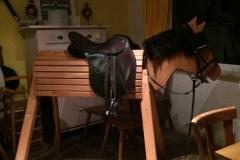 Wer sich noch nicht auf ein echtes Pferd traut, findet im RVO-Stübchen seinen Partner des Vertrauens