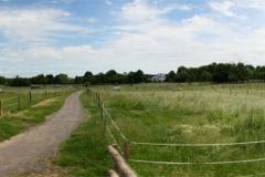 Weide-Panorama