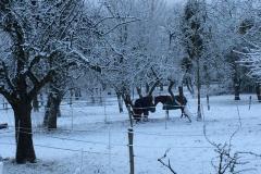 Winterkoppeln: Auch in der kalten Jahreszeit bietet der RVO Koppelgang